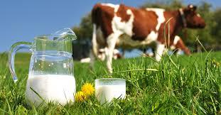 αγελαδινό γάλα