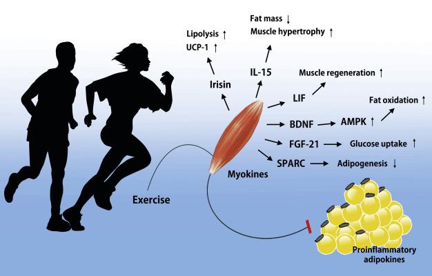 Άσκηση και σωματικό βάρος – Κάτι πολύ παραπάνω από καύση θερμίδων